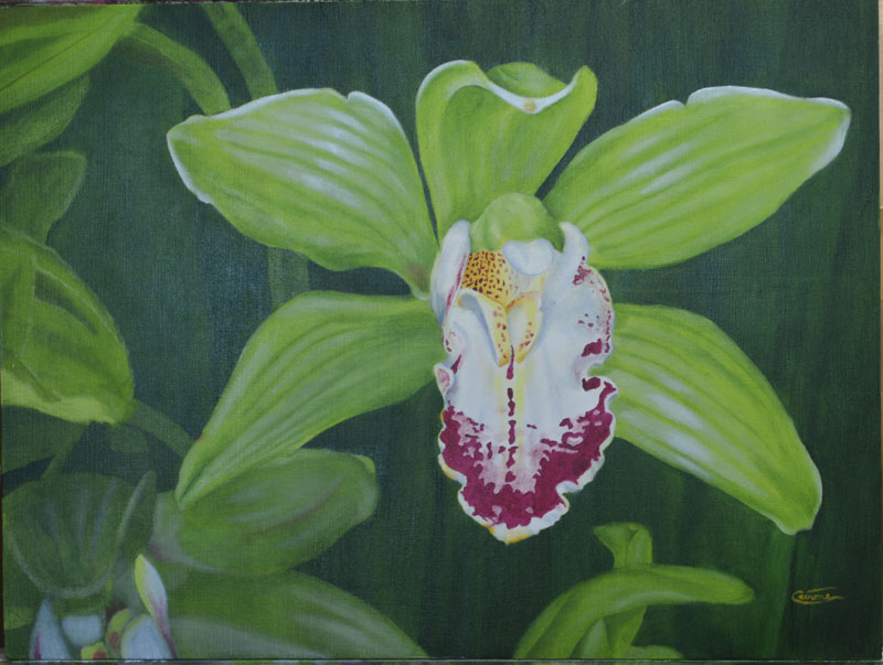 Painting of a Cymbidium Orchid