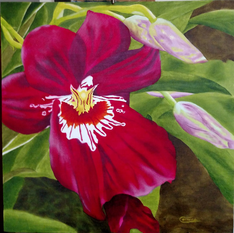 Painting of a Miltoniopsis Orchid