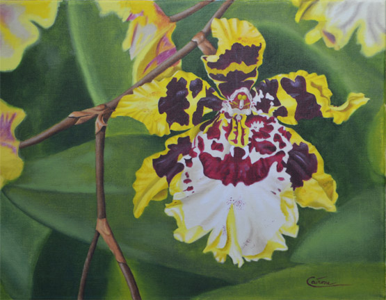 Painting of an Oncidium Orchid