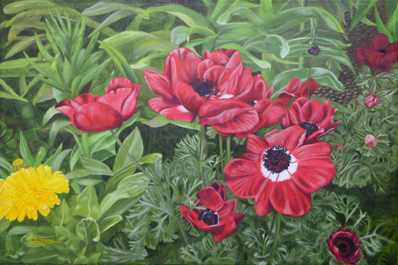 Painting of a group of Poppy Anemone flowers