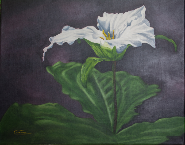 Painting of a Great White Trillium flower